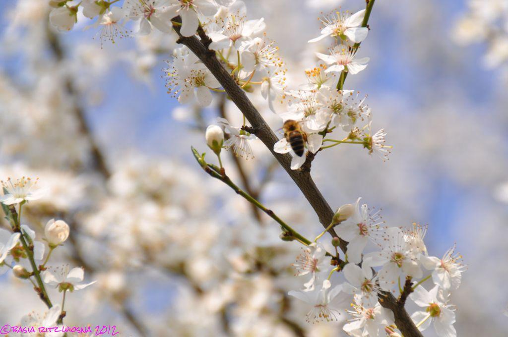 wiosna_01