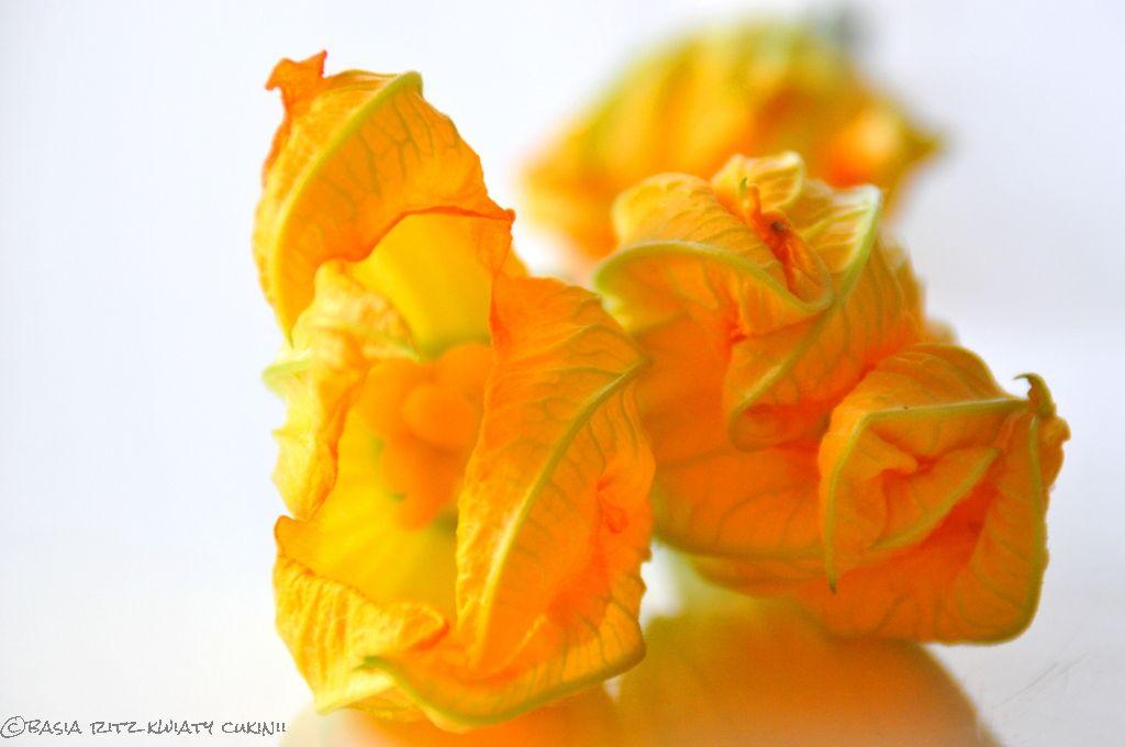 kwiaty_cukinii